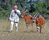 Don and Bongo Antelope